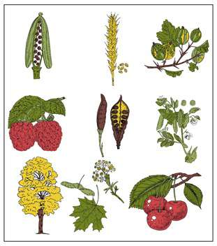 set of summer berries, grains and beans - vector gratuit #135079