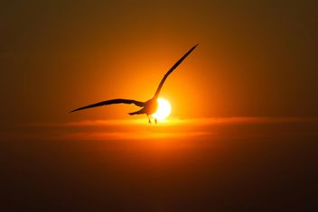 Seagull flying into sunset - Free image #136349