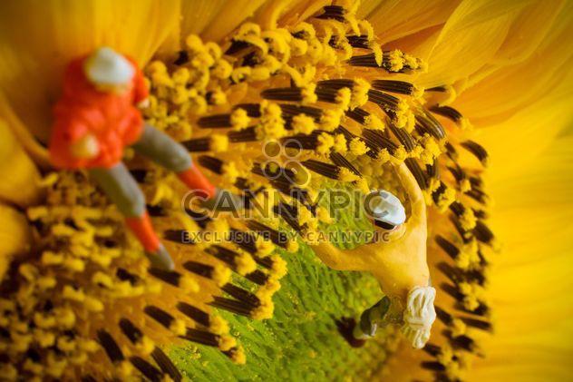 Grimpeurs de miniature sur tournesol - image gratuit(e) #136369