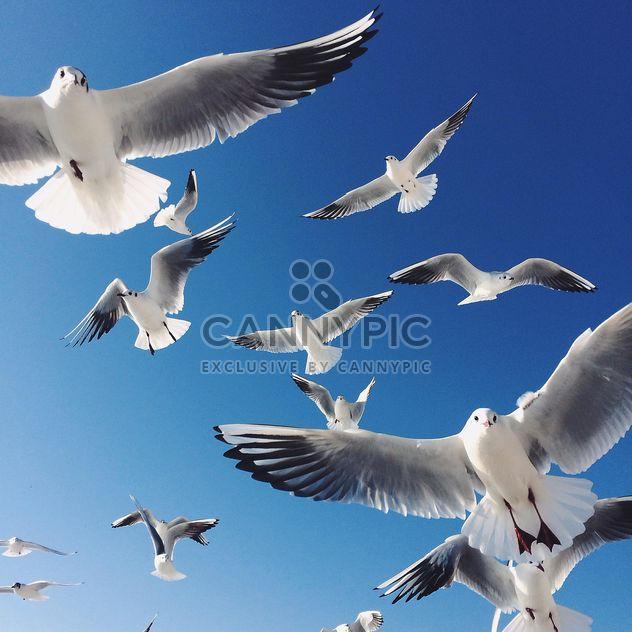 Flying seagulls - Free image #136419
