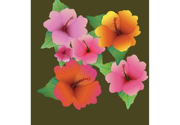 Flower Vector - Hibiscus Flowers - vector gratuit #139329