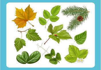 Realistic Leaf Vectors - Free vector #145609