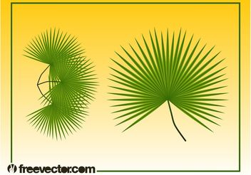 Palm Leaves Graphics - Free vector #146009