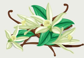 Vanilla Flower Vector - vector #146199 gratis