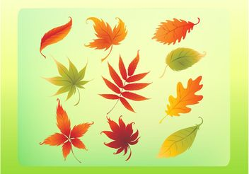 Autumn Leaves Vector Set - Free vector #146299