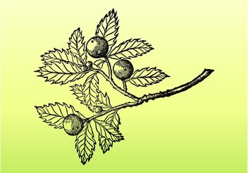 Tree Branch Graphics - Free vector #146459