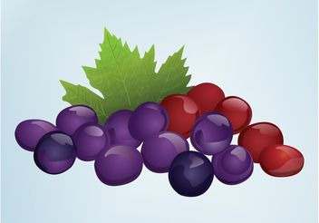 Grapes - vector gratuit #147869