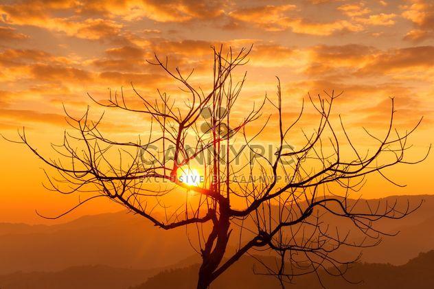 Silhouette d'un arbre dans la lumière du coucher du soleil - image gratuit(e) #147919