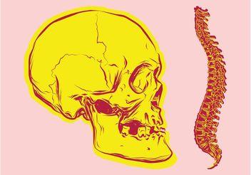 Bones Vectors - Free vector #157149