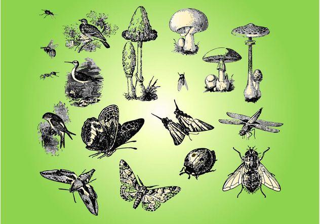 Fauna Flora - vector gratuit #157689