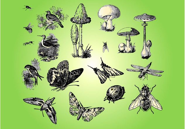 Fauna Flora - vector #157689 gratis