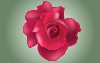 Red Rose Vector - Free vector #174389