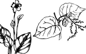 Sketchy Plants - vector gratuit #178529