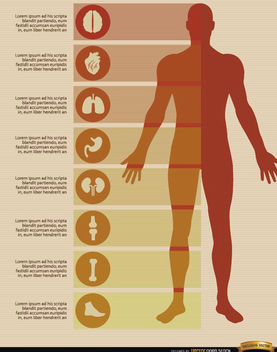 Male body infographics elements - vector gratuit(e) #179849