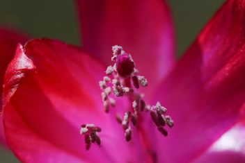 Pink flower close-up - image #182859 gratis