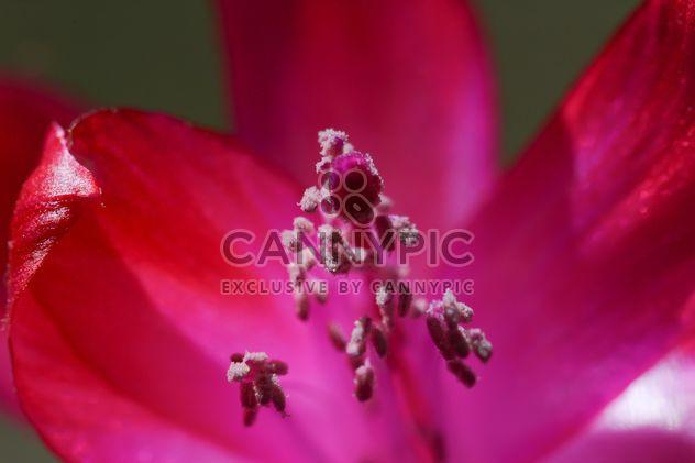 Gros plan fleur rose - image gratuit #182859