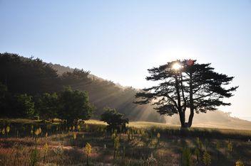 Sun behind tree - image #182869 gratis