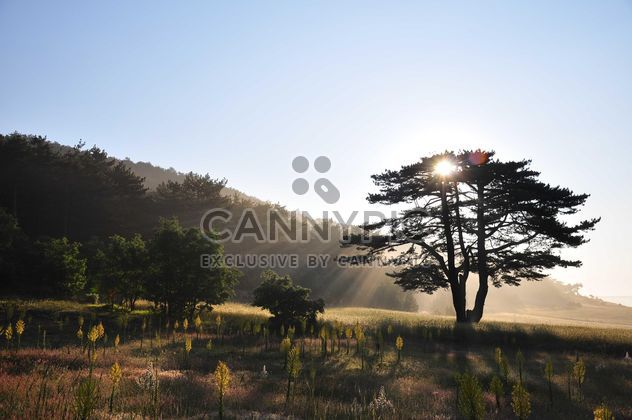 Soleil derrière l'arbre - image gratuit #182869