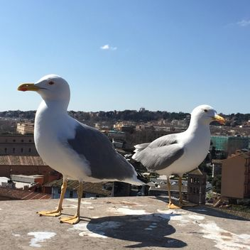 seagulls on roof - image gratuit #183089