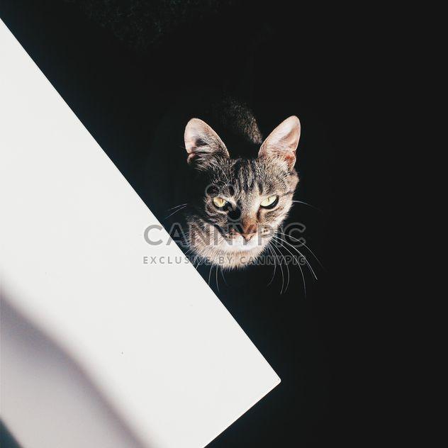 Cat on black background - Free image #183229