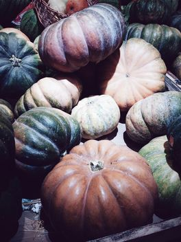 Heap of pumpkins - Free image #183259