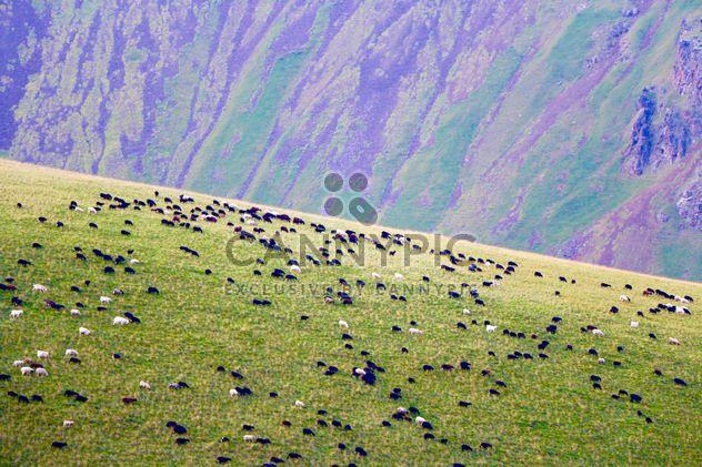 Flock of sheep on boundless grassland - Free image #183719