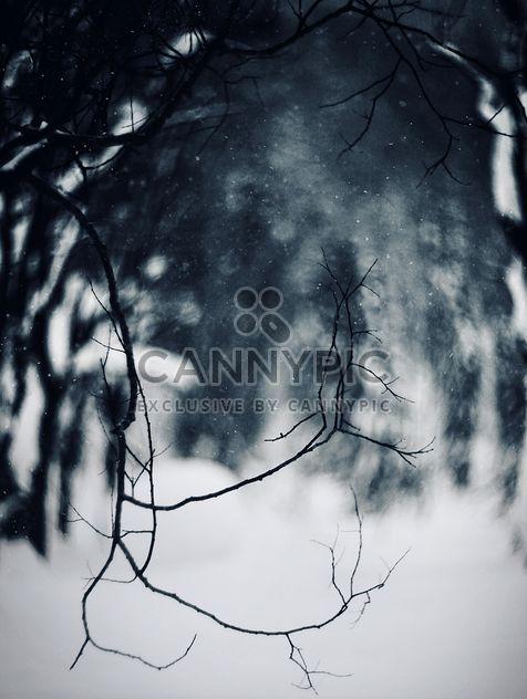 Closeup de galhos de árvores na floresta de inverno - Free image #183969