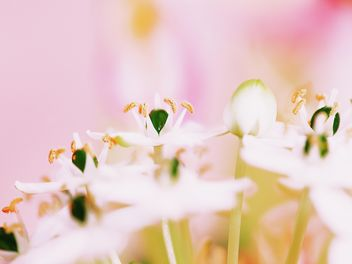 Closeup of white flowers - image gratuit #184129