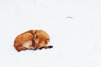 Red dog on a snow - Free image #184409