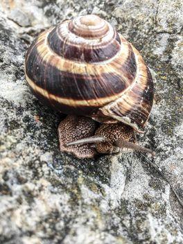 snail - image #185739 gratis