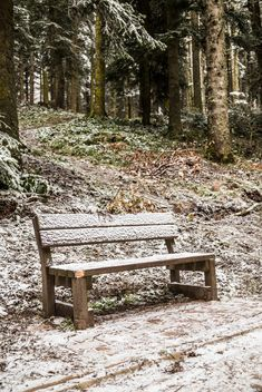 Bench in winter forest - image #185919 gratis