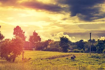 Horse on field in sunlight - image gratuit #186799
