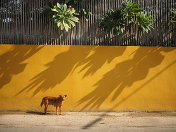 Dog near yellow wall - бесплатный image #186969