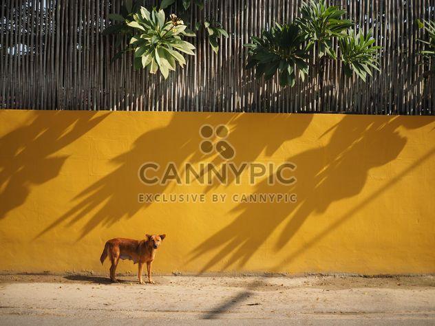 Perro cerca de pared amarillo - image #186969 gratis