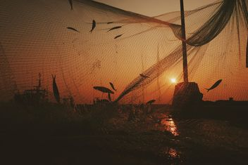 Fish in net on lake at sunset - Free image #187149