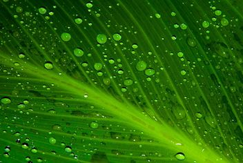 Leaf with water drops - бесплатный image #187749