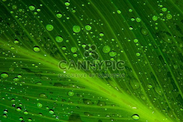 Leaf with water drops - Free image #187749