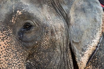 Elephant portrait - Free image #198049