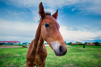 horse close up - Free image #198579