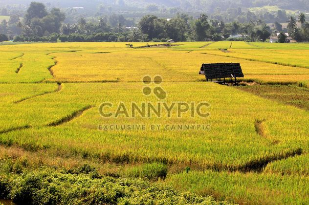 Rice field terraces, Chiang Mai Province, Thailand - Free image #199019
