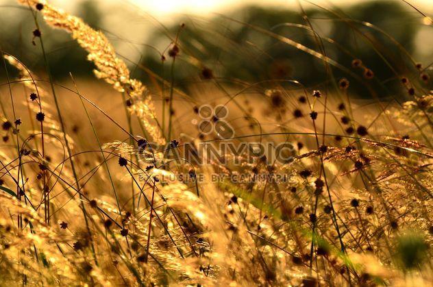Campos de verano - image #200939 gratis
