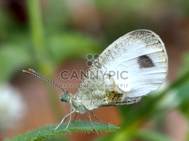 Butterfly on the grass close up - Free image #201509