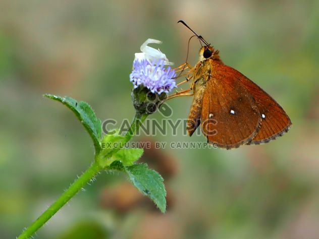 Butterfly called - Free image #201519