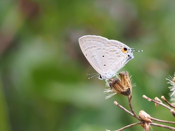 Close-up of butterfly in garden - Free image #201569