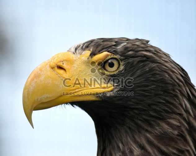 Close-Up Portrait Of Eagle - Free image #201649