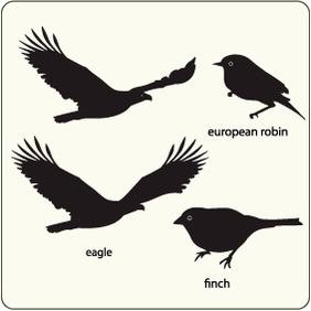 Birds 24 - Kostenloses vector #204649