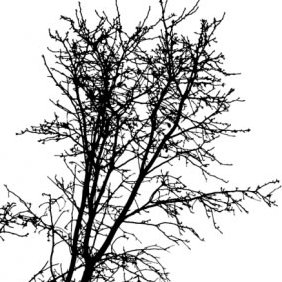Tree Silhouette - Free vector #211699