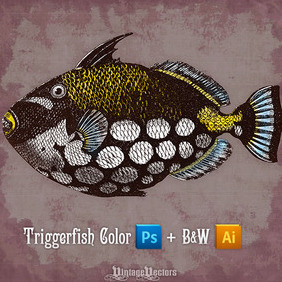 Clown Triggerfish - Free vector #213629