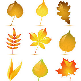 Glossy Autumn Leaves - Free vector #214169