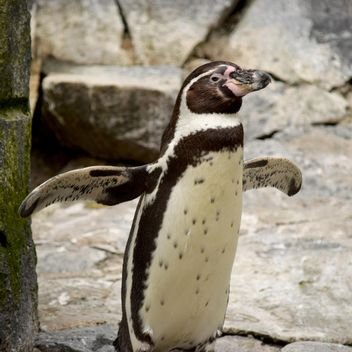 Penguin in The Zoo - image gratuit(e) #225329